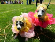 dog-costume-contest-daybook